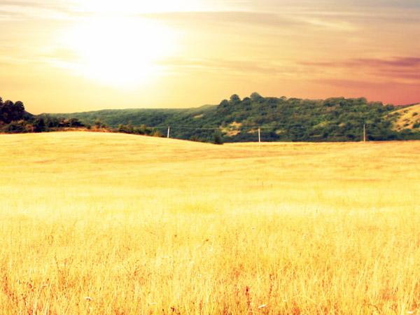 Getreidefeld am Bauernhof