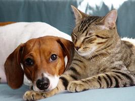 Hund Oder Katze Was Soll Ich Mir Holen Sind Katzen Oder Hunde Besser