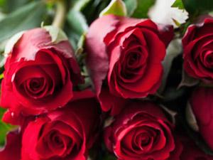 Rosenblüten im Badewasser