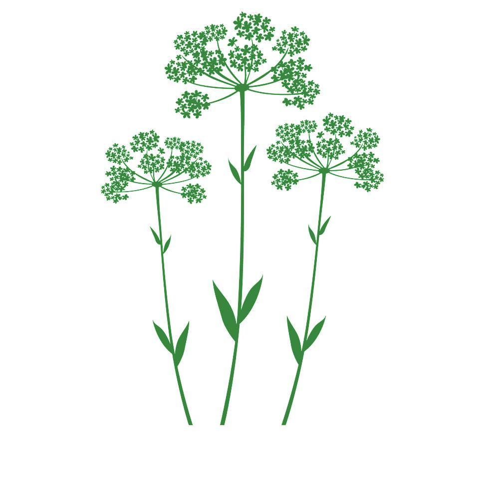 Faszinierend Wandtattoo Gras Galerie Von Wandtattoo-anis-pflanze-gras-deko-blume-von-designscape