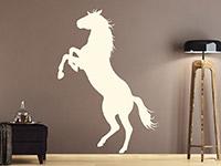Wandtattoo elegantes Pferd auf dunklem Hintergrund