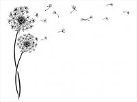 Wandtattoo Stylische Pusteblumen