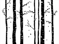 Wandtattoo Verträumter Birkenwald Motivansicht